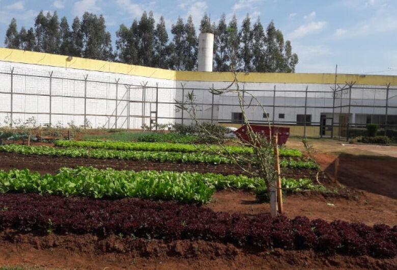 Em penitenciária de Naviraí, cultivo da terra por detentos garante doação de verduras