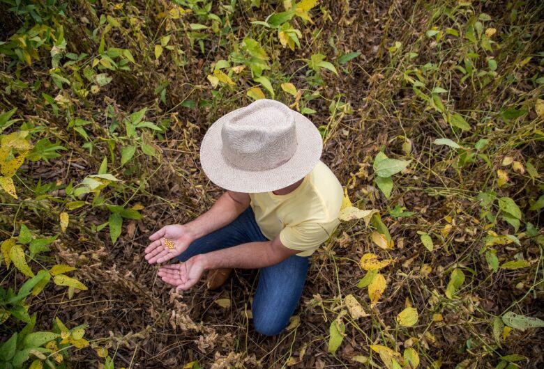 Com crescimento à vista, MT e MS já cultivaram 70% de suas lavouras de soja