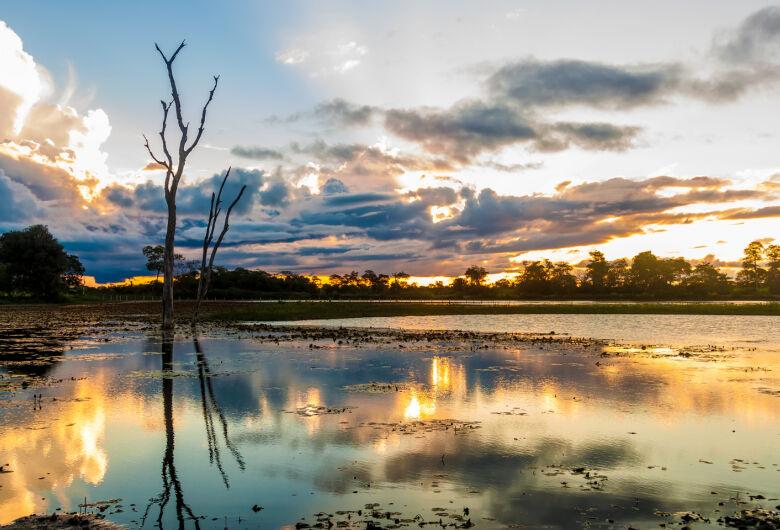 Hoje é o Dia do Pantanal, Patrimônio da Humanidade e Reserva da Biosfera