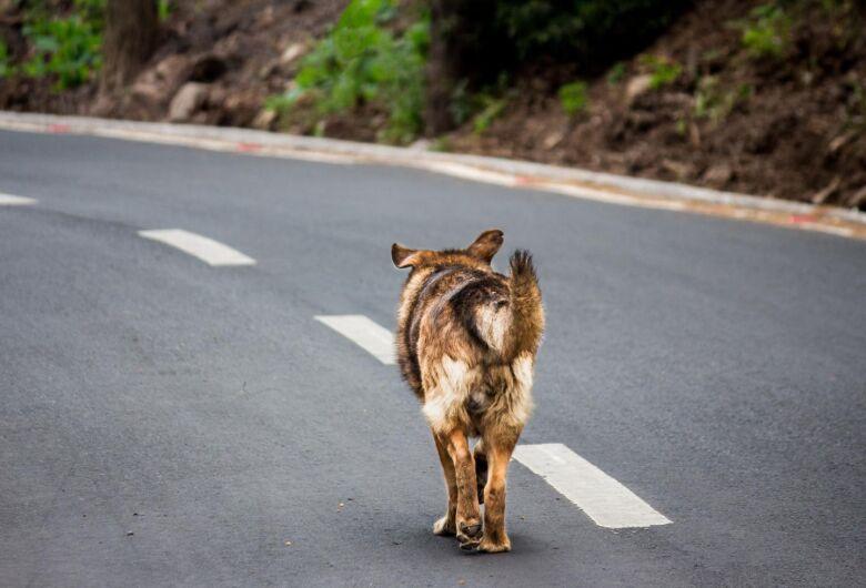 Cachorro solto nas ruas pode gerar multa de até R$ 15 mil ao tutor