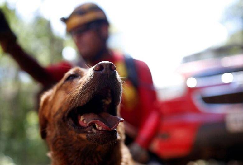 Vale aluga fazenda para cuidar de animais resgatados em Brumadinho