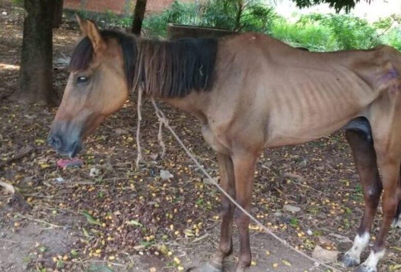 Homem é multado por deixar égua sem água e comida