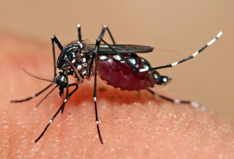 Saiba o que é a Dengue e os sintomas dessa doença que pode levar a morte