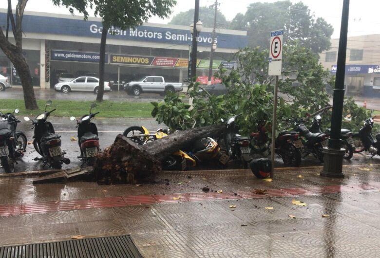 Chuva desta quarta-feira derrubou árvores e alagou diversos pontos de Dourados