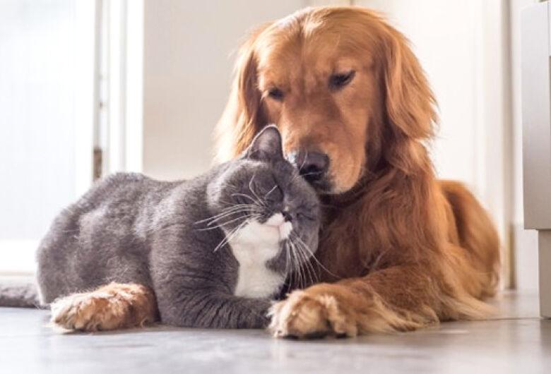Transporte intermunicipal permite levar cães e gatos, mas é preciso observar regras