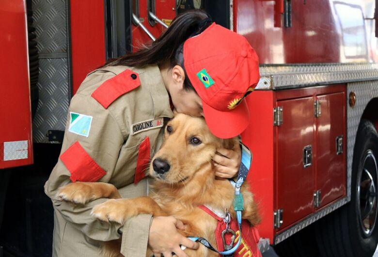Cães doam carinho e amor como brincadeira e projeto dos Bombeiros já tem fila de espera