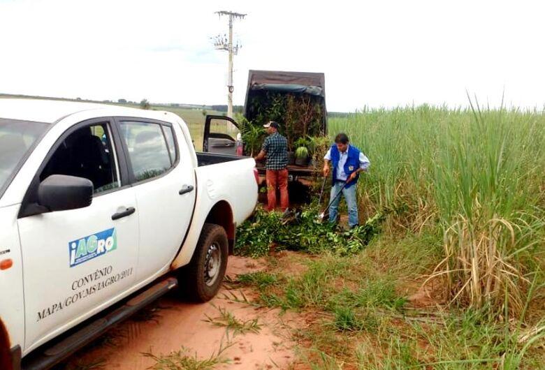 Comércio ambulante de mudas passa a ser proibido em Mato Grosso do Sul