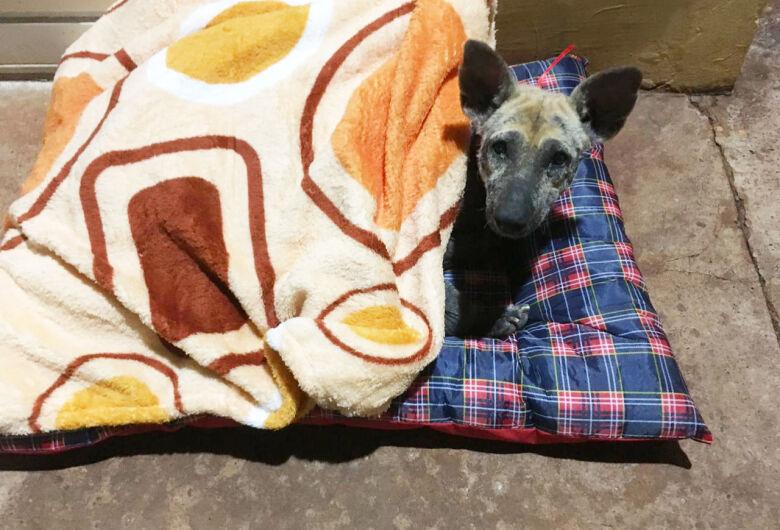 Protetores resgatam cachorro que sofria maus tratos