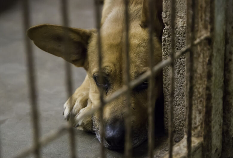 Homem é detido, em Dourados, por espancar cachorro