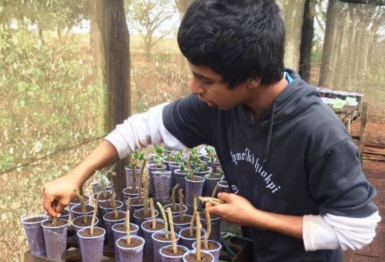 Dourados inicia o processo de implantação de hortas fitoterápicas