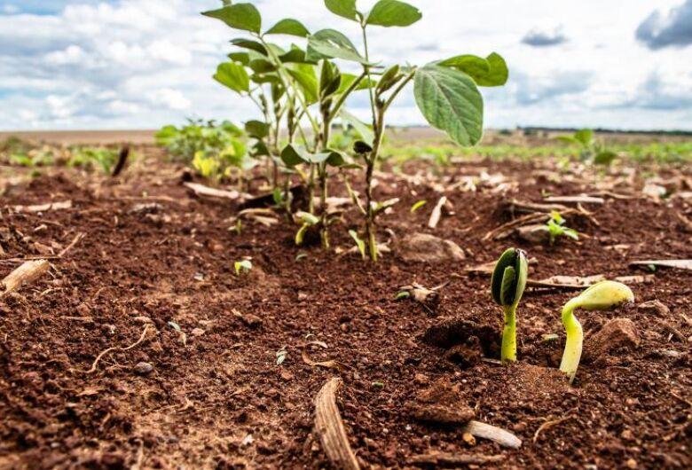 Plantio da Soja já atingiu 12,4% em Mato Grosso do Sul