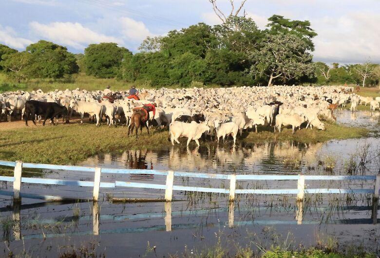 Censo aponta que 61% de propriedades economicamente ativas em MS são da agricultura familiar