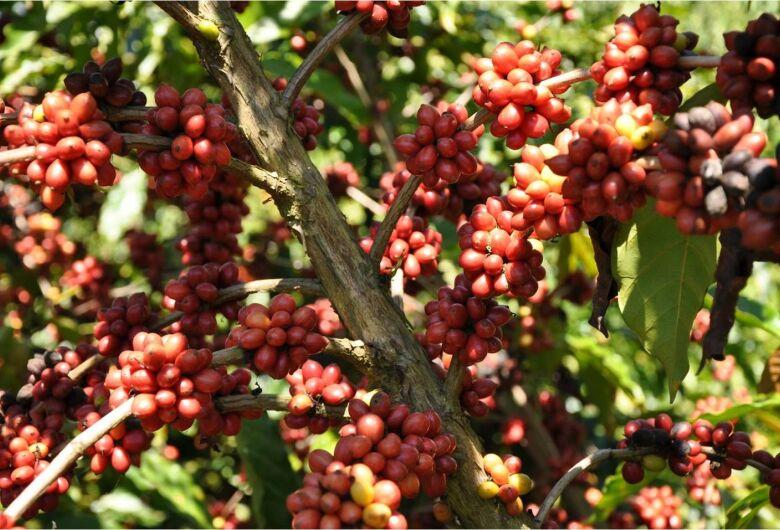 Consumo de café atinge 168 milhões de sacas