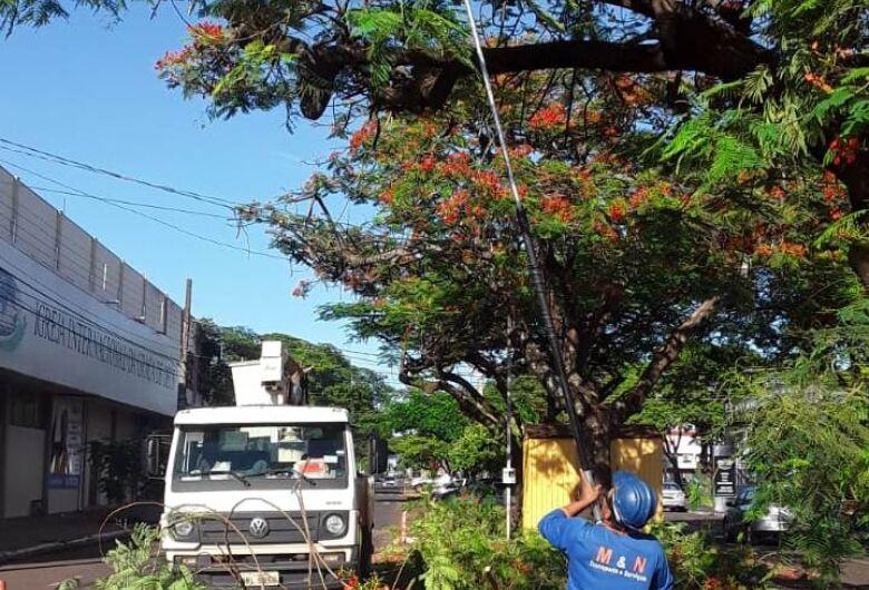 Prefeitura de Dourados poda árvores na região central