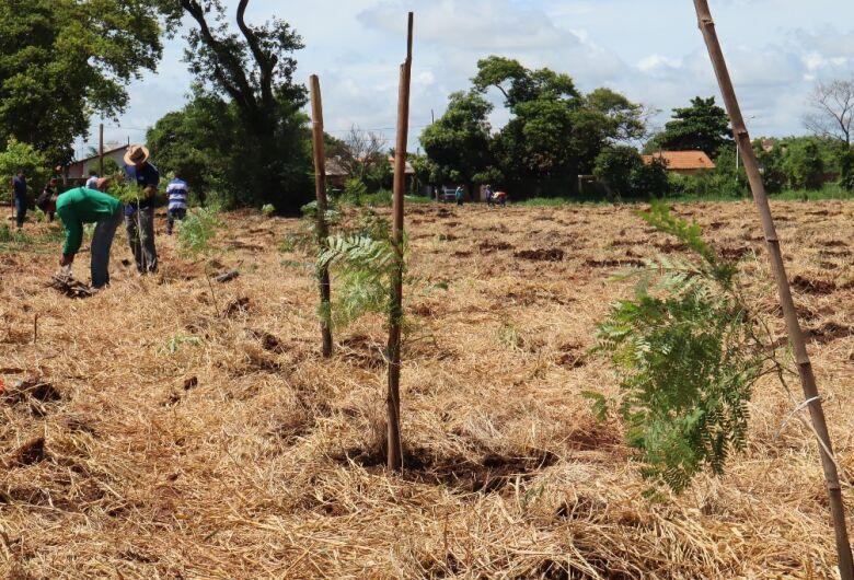 Dourados realiza plantio recorde de 1,7 mil árvores no Rego D'água