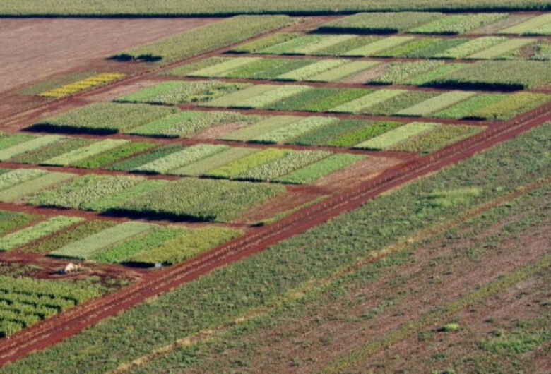 No próximo dia 7, Fazenda Experimental da UFGD fará Dia de Campo