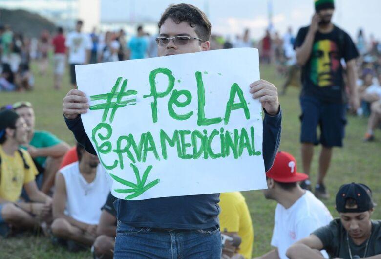 Venda de remédios à base da Cannabis ainda é incerta nas farmácias