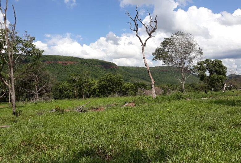 Imagens de satélite entregam desmatamento de 11,9 hectares em fazenda