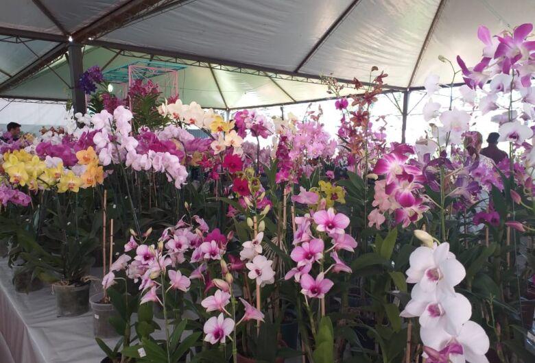 Feira de Flores expõe diversas espécies de plantas na Praça Antônio João