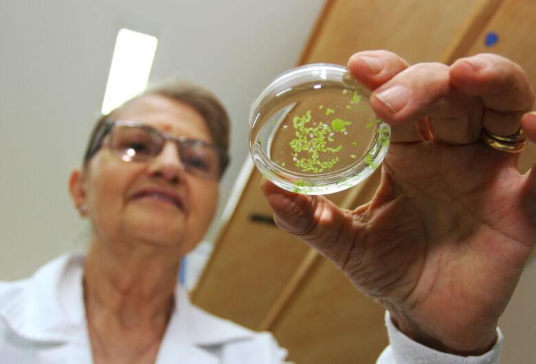 Mais da metade dos pesquisadores de Mato Grosso do Sul são mulheres