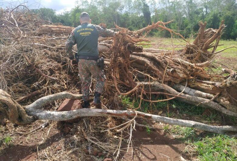 Infrator é autuado em R$ 42 mil pela Polícia Ambiental de Batayporã após desmatamento ilegal