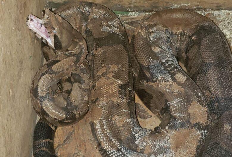 Duas serpentes foram capturadas em 1 hora na Capital