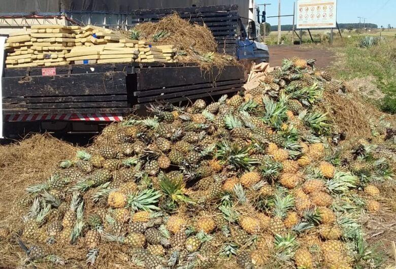 Polícia apreende maconha em caminhã de abacaxi