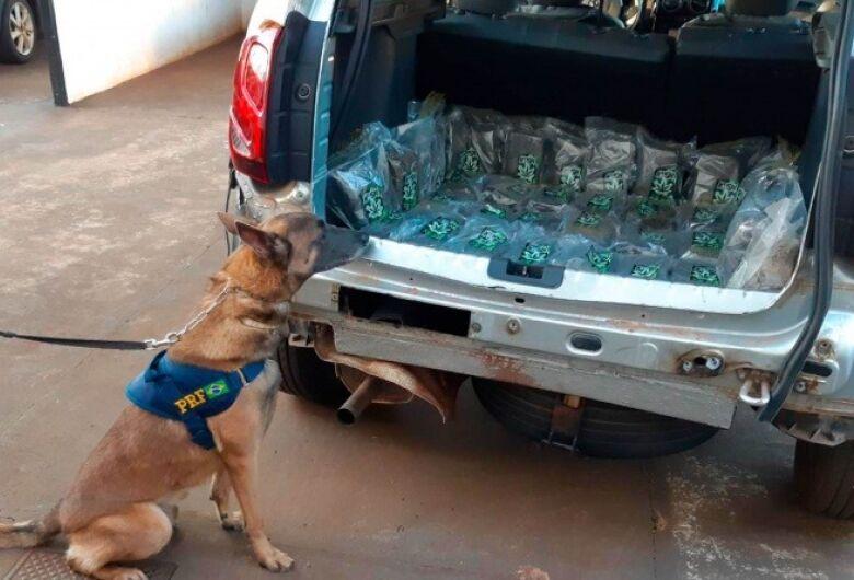 Operação Tamoio: Cães farejadores descobrem 21 Kg de skunk