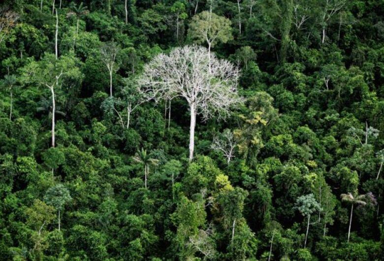 Em 2019, Brasil foi responsável por um terço da perda de florestas virgens no mundo, diz relatório