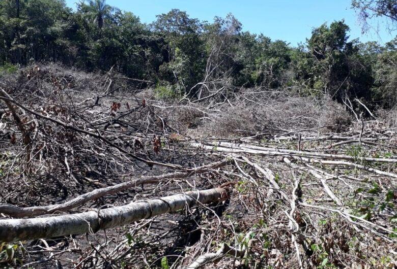 Fazendeiro é multado em R$ 21 mil por extrair madeira ilegalmente de reserva no interior de MS