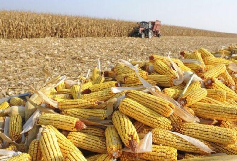 Mato Grosso do Sul deve colher 8,2 milhões de toneladas de milho em 2020