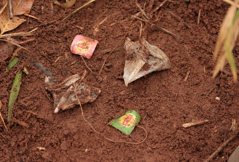 Pesquisadores usam saquinhos de chá para avaliar qualidade do solo