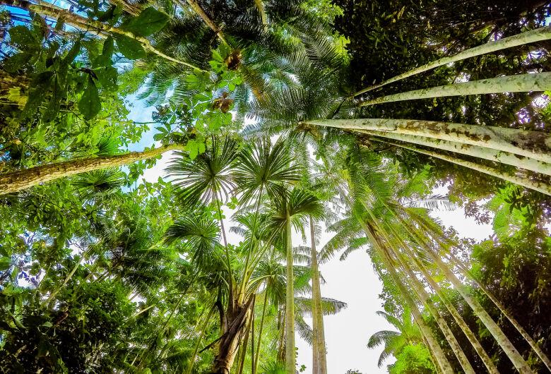 Mourão: país está comprometido com atividades sustentáveis na Amazônia
