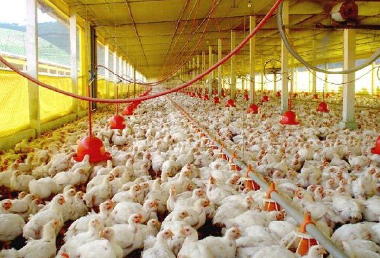 Exportações de carne de aves em MS disparam com rígido protocolo de biossegurança
