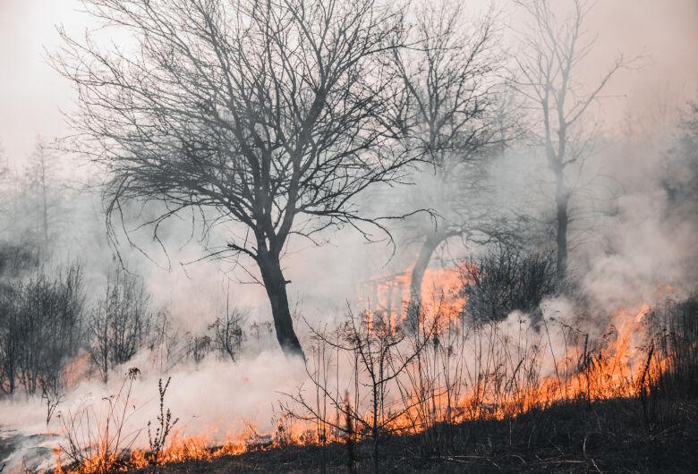 Queimada do Pantanal é a maior catástrofe ambiental desde a seca de 70