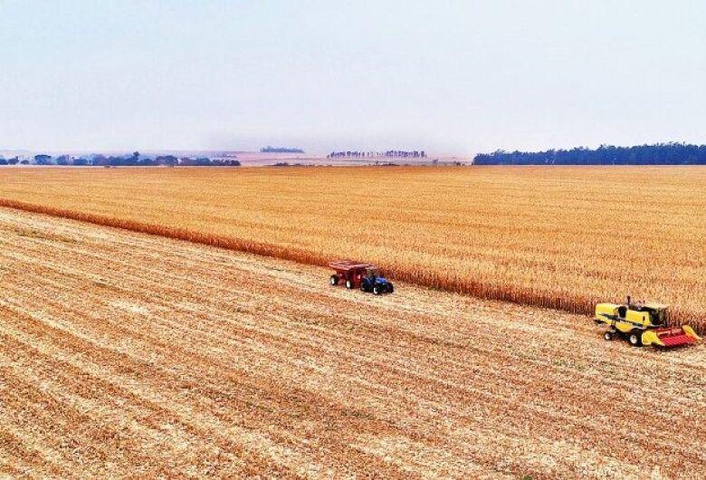 Colheita do milho se aproxima dos 40% em Mato Grosso do Sul