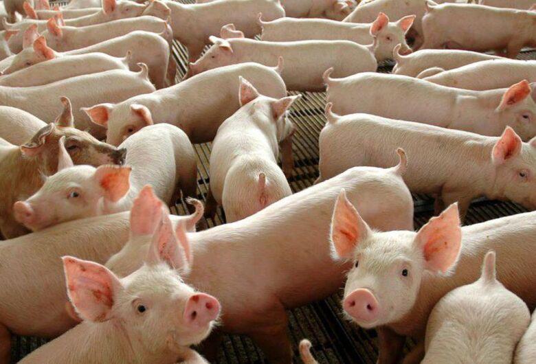 Abate de suínos cresce no 2º trimestre e chega a 12 milhões
