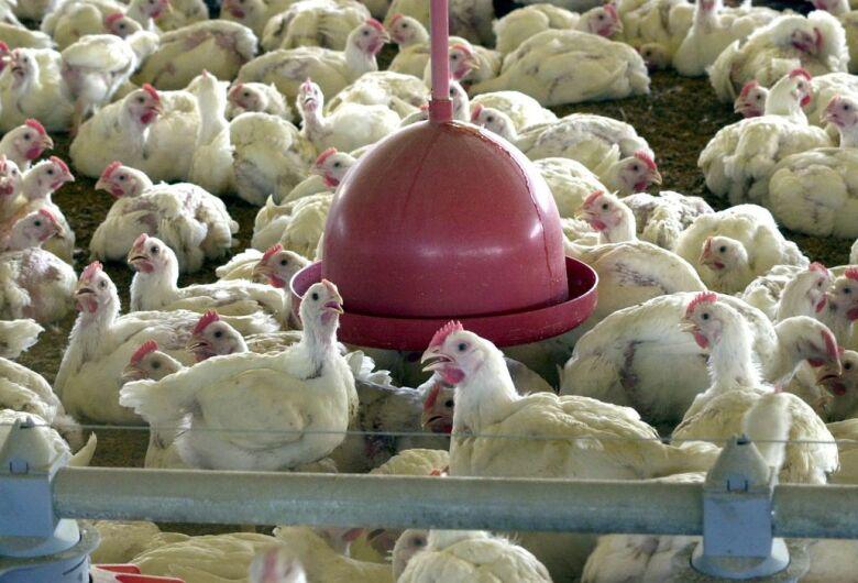 Brasil pede explicações à China sobre frango supostamente contaminado