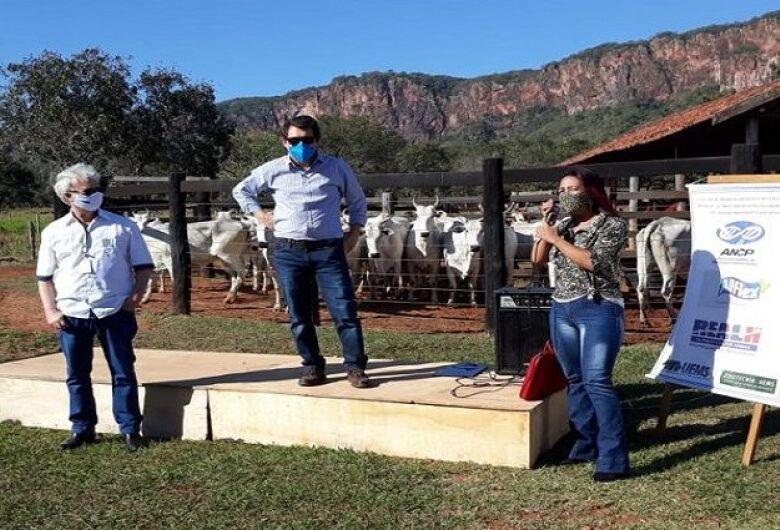Leilão de bovinos realizado pela SAD supera meta e arrecada R$ 106 mil