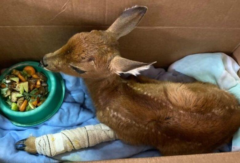 Centro de Reabilitação de Animais faz primeiros resgates de vítimas dos incêndios
