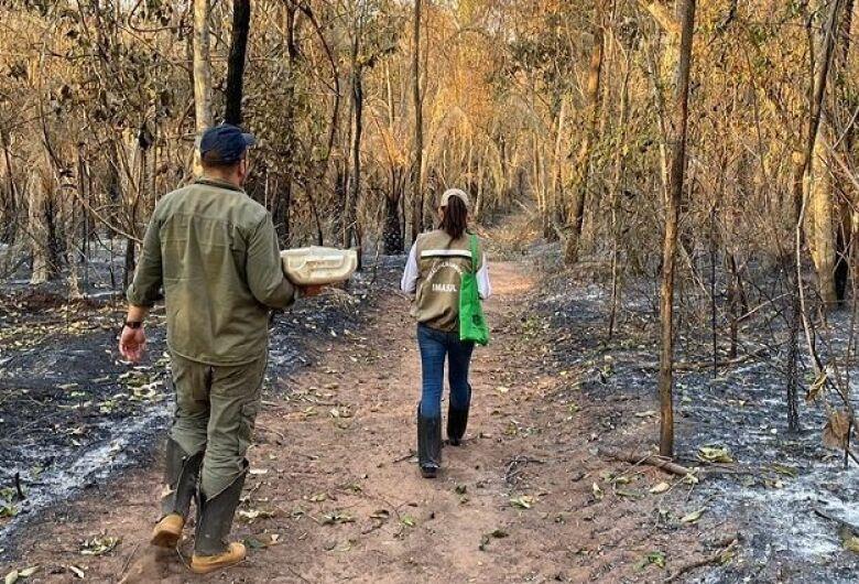 Com provas suficientes, PF poderá indiciar fazendeiros por queimadas no Pantanal