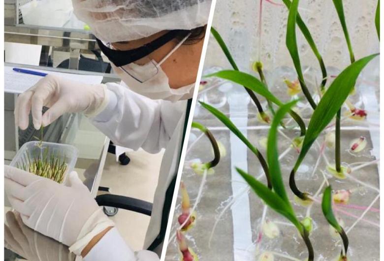 Pesquisa irá criar biodefensivos para controle de doenças para as principais culturas agrícolas
