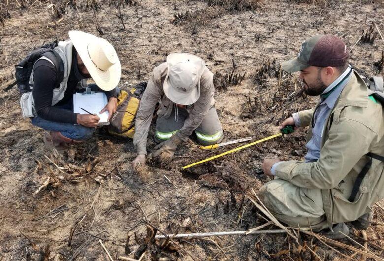 Força-tarefa tenta estimar número de animais mortos no Pantanal
