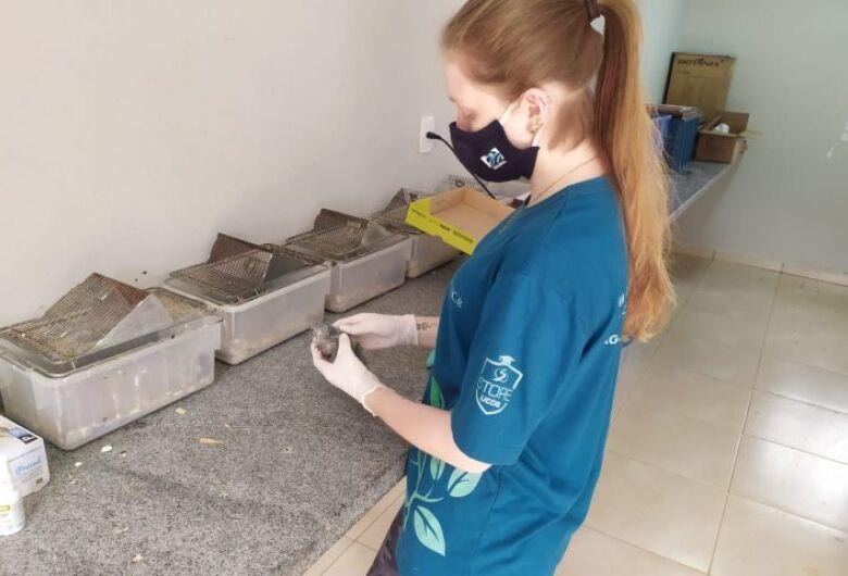 Veterinários do CRAS já trataram 17 animais vítimas das queimadas em MS