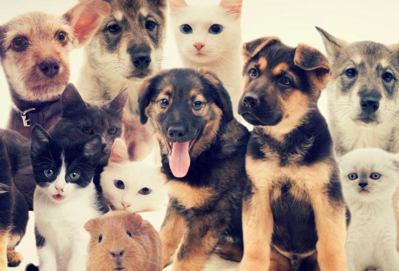Projeto obriga síndico a comunicar maus-tratos de animais em condomínios