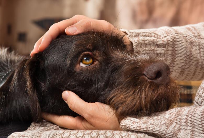 Prefeitura arcará com castração e vacinas de gatos e cães acolhidos