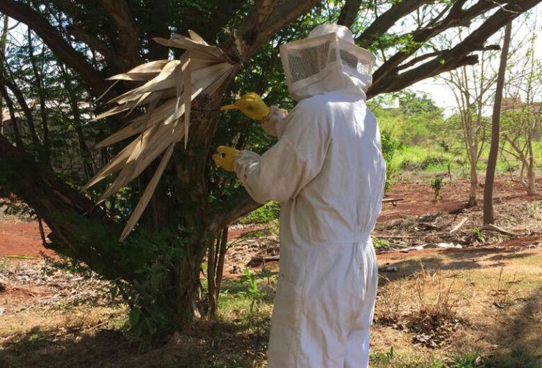 Temidos, marimbondos podem controlar pragas nas plantações