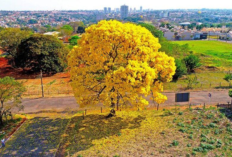 Frente fria dá boas-vindas a primavera e ameniza clima em Mato Grosso do Sul