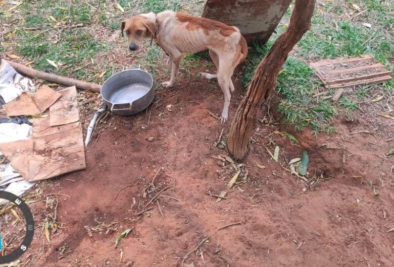 Moradora mantinha 6 cachorros em situação de penúria