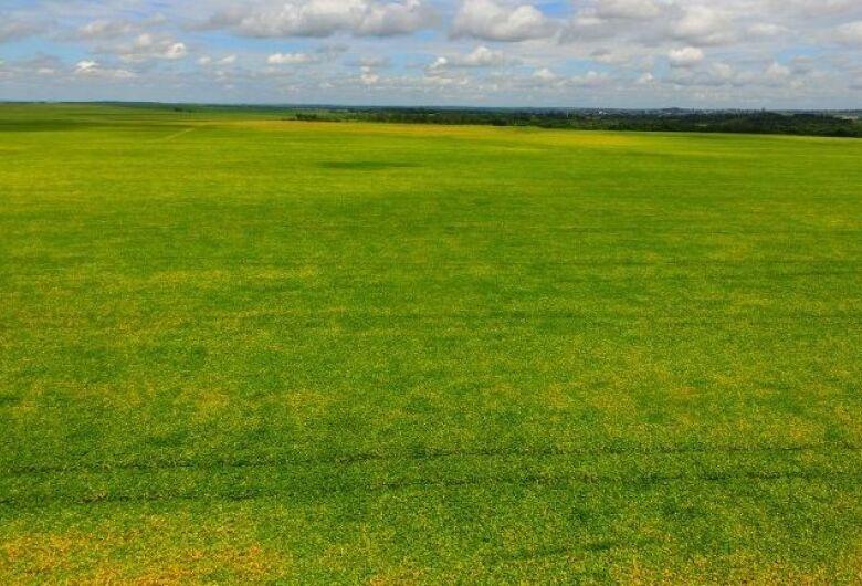 Produtores de soja tem até 31 de dezembro para cadastrar área de plantio
